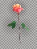 Rosa hermoso Rose Stems en un fondo transparente Ilustraci?n del vector stock de ilustración