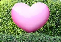 Rosa Herz auf grüner Hecke stockbilder
