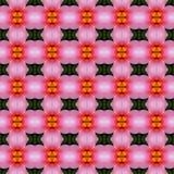 Rosa Hibiscusblume in voller Blüte nahtlos vektor abbildung