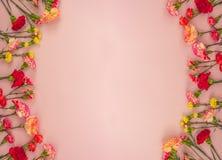Rosa Hintergrund mit Gartennelkenblumen und Kopienraum Beschneidungspfad eingeschlossen lizenzfreie stockfotografie