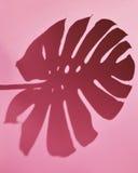 Rosa Hintergrund mit Schatten Lizenzfreies Stockbild