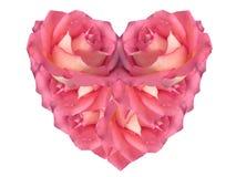 Rosa hjärta som göras av rosor Royaltyfri Bild