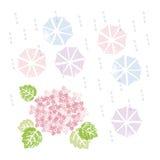 Rosa Hortensie und Regenschirme in der Regenzeit Lizenzfreies Stockfoto