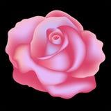 Rosa. Illustrazione di vettore Fotografie Stock Libere da Diritti