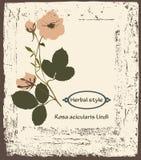 Rosa Royalty Free Stock Photos