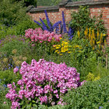 Rosa Impatiens, blåa riddarsporrar, gula Achillea, i Chartwell Royaltyfri Foto