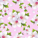 Rosa inconsútil hermoso del modelo con el flor de Sakura Imagen de archivo libre de regalías