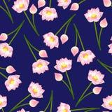 Rosa indisk lotusblomma på marinblå bakgrund Nelumbonucifera, sakral lotusblomma, böna av Indien, egyptisk böna Nationell blomma  stock illustrationer