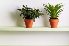 Rosa inlagd miniatyr och bromeliaväxt på hylla royaltyfria foton