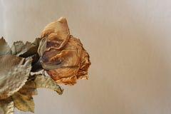Rosa inoperante Fotos de Stock Royalty Free