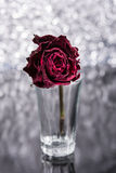 Rosa inoperante Fotografia de Stock Royalty Free