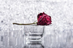 Rosa inoperante Fotografia de Stock