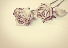 Rosa inoperante Withered levantou-se imagem de stock royalty free