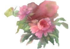 Rosa isolerad bakgrund för pion vattenfärg Arkivfoto