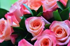 Rosa ist das ein tragende Rosa lizenzfreies stockbild