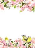 Rosa Kirschblüte-Blumen der Blüte und Liedvögel Blumenkarte oder freier Raum watercolor Stockfotos