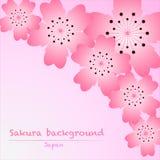 Rosa Kirschblüte Kirschblüte-Hintergrund auf rosa Hintergrund Vektor Abbildung