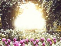 Rosa kleine Blume im Park bei Sonnenuntergang Lizenzfreie Stockfotografie