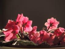 Rosa kleine Blumen Lizenzfreies Stockfoto
