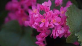 Rosa kleine schöne Blumen Lizenzfreies Stockfoto
