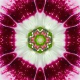 Rosa koncentrisk blommamitt Mandala Kaleidoscope royaltyfri foto