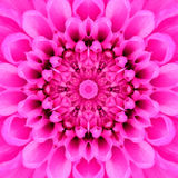 Rosa koncentrisk blommamitt. Mandala Kaleidoscopic design Arkivbild