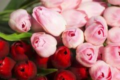 Rosa konstgjord tulpan som är röd och Arkivfoton