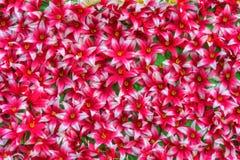 Rosa konstgjorda blommor Royaltyfria Foton