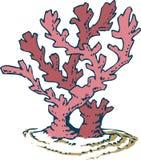 Rosa korall Arkivbild