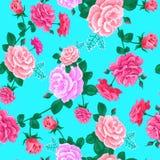 Rosa kort blue-01 Arkivfoton
