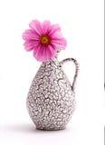 Rosa Kosmos-Blume lizenzfreies stockbild