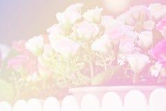 Rosa kronblad för Unfocused suddighet, romansk bakgrund för abstrakt begrepp Royaltyfri Foto