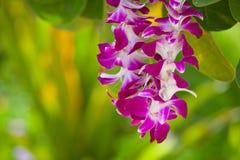 Rosa kronblad i Lei Arkivfoton