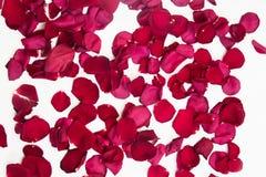 Rosa kronblad ordnade i en modell på en vit bakgrund royaltyfri foto