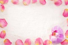Rosa kronblad på en vit handduk. Royaltyfri Foto
