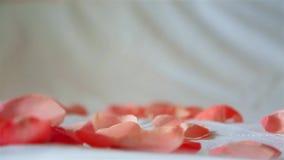 Rosa kronbladrosa f?rger som bort bl?sas av vinden p? en vit bakgrund HD 1920x1080 stock video
