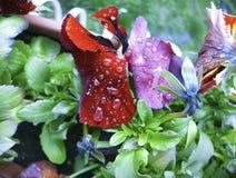 Rosa krople na kwiacie Zdjęcia Stock