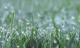 Rosa krople na zielonej trawie obrazy stock