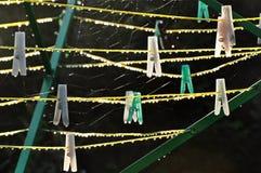 Rosa krople w ranku na arkanach i kahatach zielenieją stojaka zdjęcie royalty free