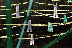 Rosa krople w ranku na kahatach, sieciach i arkanach, zielenieją stojaka zdjęcia royalty free