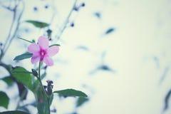 Rosa lösa blommor för tappningbakgrund, härlig natur, naturväxter arkivbilder