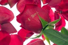 Rosa l'8 marzo Fotografia Stock Libera da Diritti