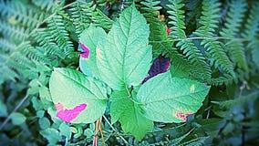 Rosa leaf Fotografering för Bildbyråer