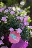 Rosa Lebenslauf Rosa chinensis Minimum für Mutter-Tag Stockbilder