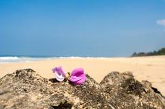 Rosa Leelawadee blomma på sanden Arkivfoton