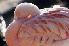 Rosa leichter Flamingo im Sonnenlicht Beppu, Japan stockfoto