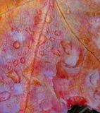 rosa liści, zdjęcie stock