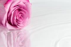Rosa ligger på yttersidan av vattnet med lätta krusningar royaltyfria foton