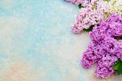 Rosa lila blommor gränsar på blå pastellfärgad bakgrund Bästa sikt, c Royaltyfri Fotografi