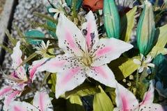 Rosa Lilie stockbild